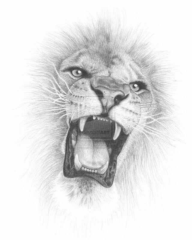 brüllender löwenkopf zeichnung