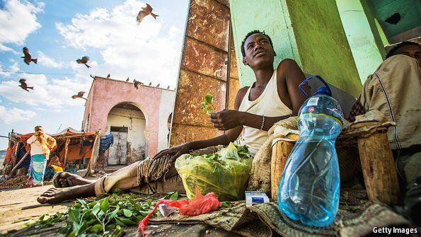 La situazione di qat piccoli agricoltori in Etiopia e Kenya.jpg