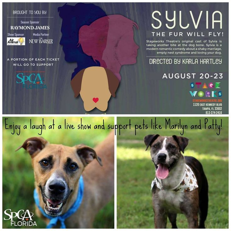 Fans of the A.R. Gurney play, Sylvia may purchase tickets to benefit the SPCA Florida this Thursday through Sunday. Thank you to Stageworks Theatre and Air Animal Pet Movers since 1977 for making this all possible. Dog lovers, you will enjoy the show, we promise. #spca #doglovers #tampabay