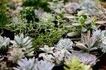 comprar-suculentas-floricultura-1