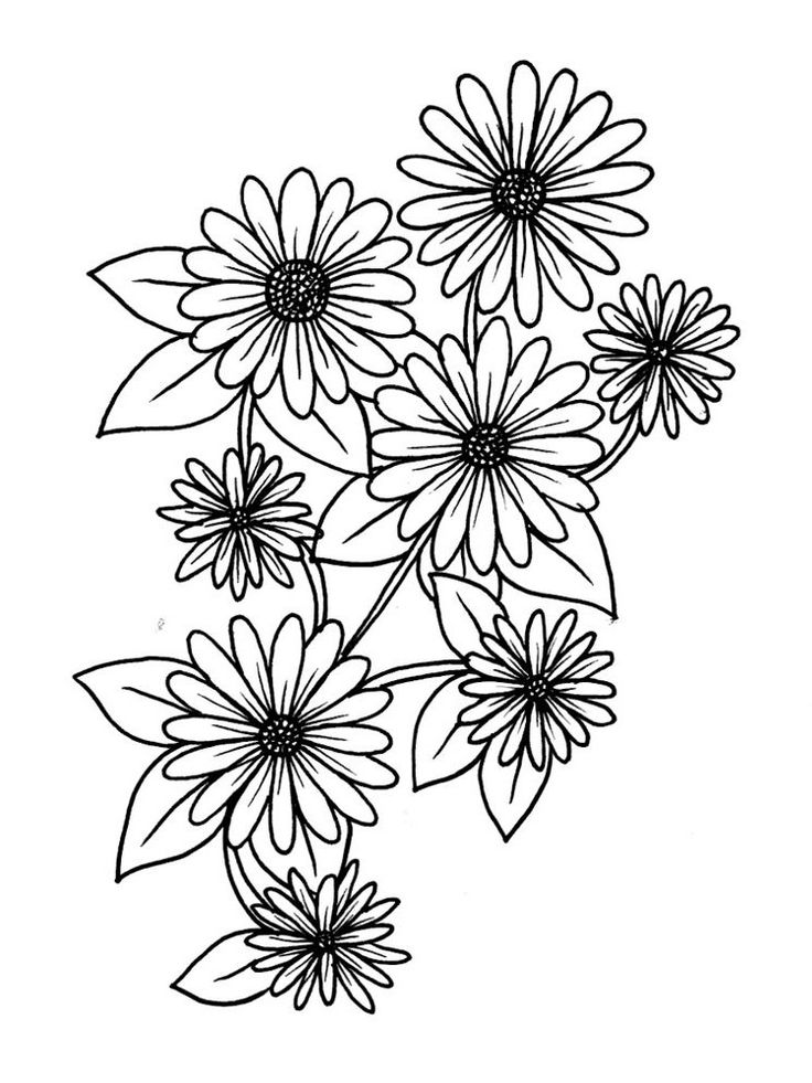 Pin by Cherry Nguyem on Daisy in 2020 Flower printable