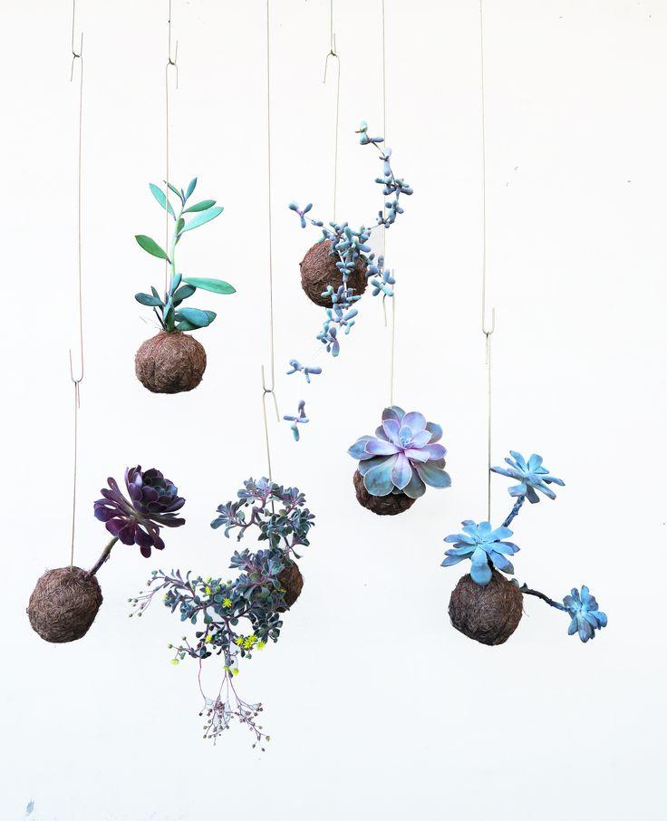 Visit our own shop Designkollektivet, Nørrebro | Planteplaneter | Plant Planets