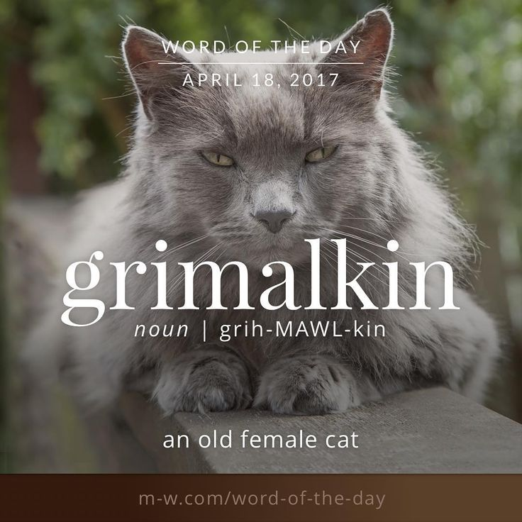 Image result for definition of quilting grimalkin