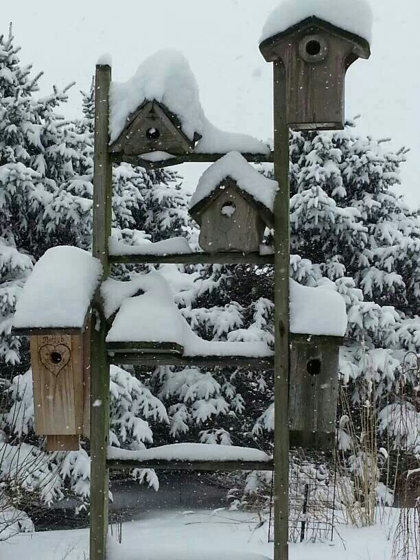 Old wooden ladder and birdhouses