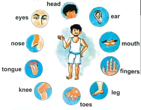 ... body parts | English for Kids | kiara | Pinterest | Body Parts, Search