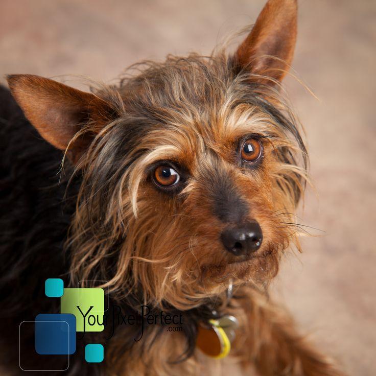 Pet Photography by Your Pixel Perfect Scranton Pa Pets