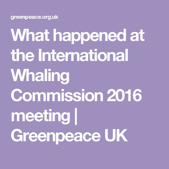 What happened at the International Whaling Commission 2016 meeting | Greenpeace UK
