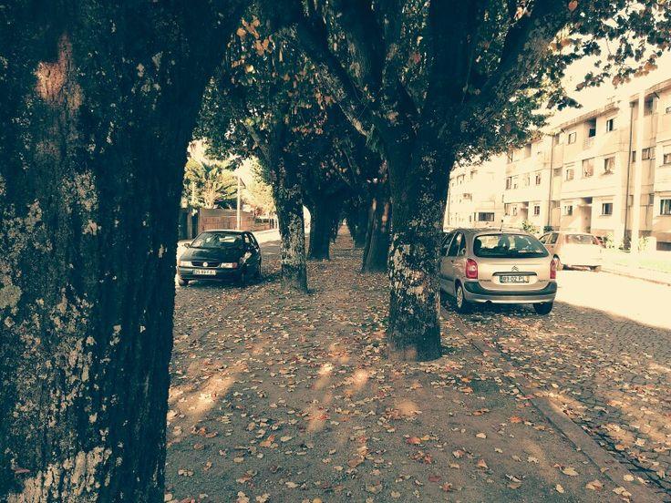 Avenida Sameiro Penafiel