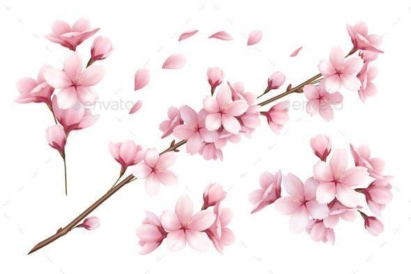 Sakura Realistic Set Cherry Blossom Background Nature Vector Flower Branch