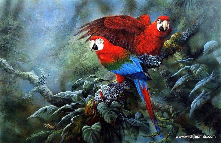 Artist Gamini Ratnavira Unframed Bird Wildlife Print Green Wing Macaws | WildlifePrints.com