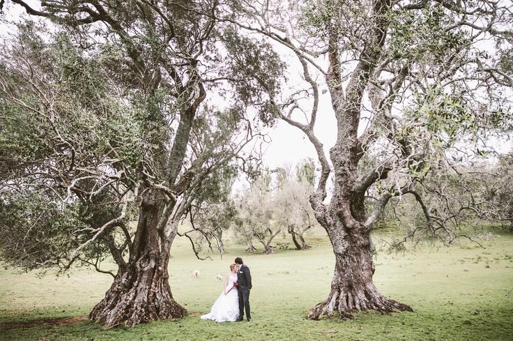 Melody + Joel Wedding Auckland New Zealand Wedding Photographer www.threetwentythreephoto.com