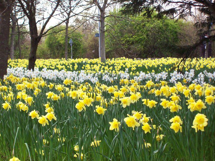 Skotsko na jaře