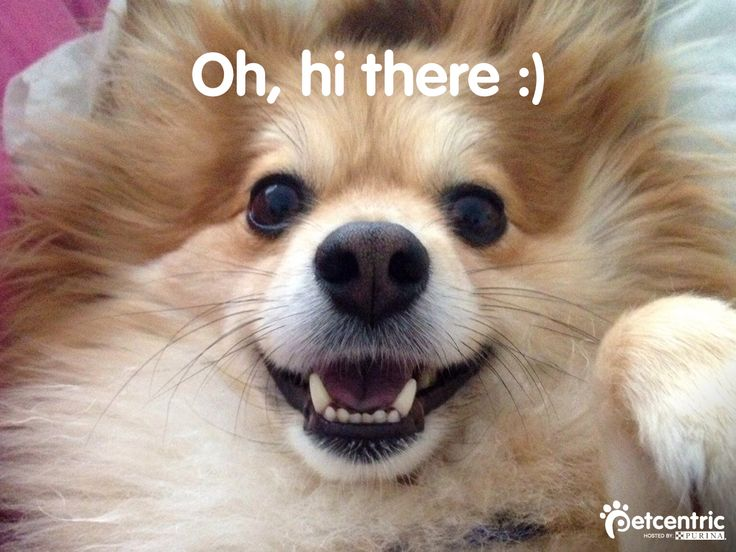 Happy #WorldSmileDay! What makes your pet smile?
