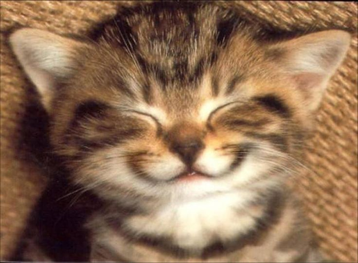 Chat sourire