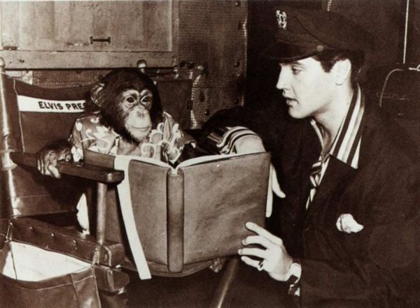 Elvis' pet chimpanzee Scatter was nothing but trouble from day one. Scatter: the Story Of Elvis Presley's Pet Chimpanzee - Neatorama