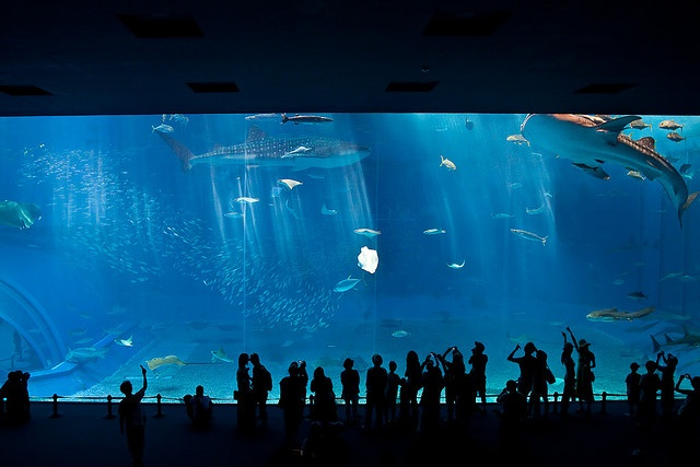 Kuroshio Sea, Churaumi Aquarium in Okinawa Japan