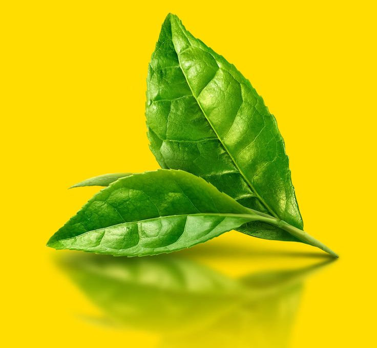 Lipton tea leaf