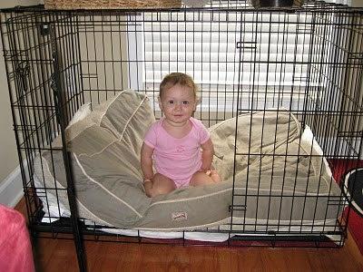 "Midwest XXL Dog Crate  Size: 54""L x 35""W x 45""H"