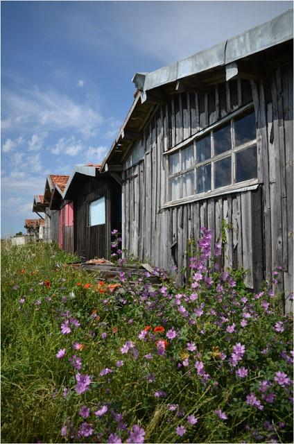 Fleurs et cabanes au port de Larros - Gujan-Mestras