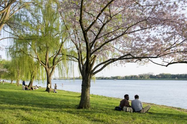 Learn about the Potomac River, recreation along its major tributaries, waterfront locations in the Washington DC area and cities in the Potomac Basin.