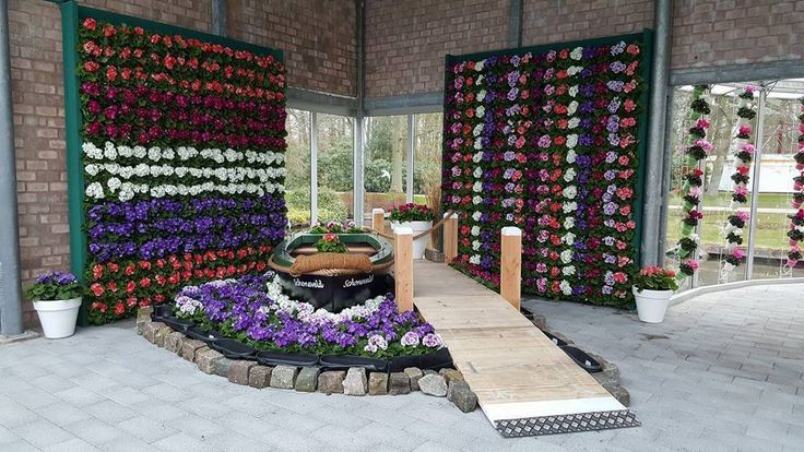 Walls of Primula Touch Me in the colours of the Dutch flag