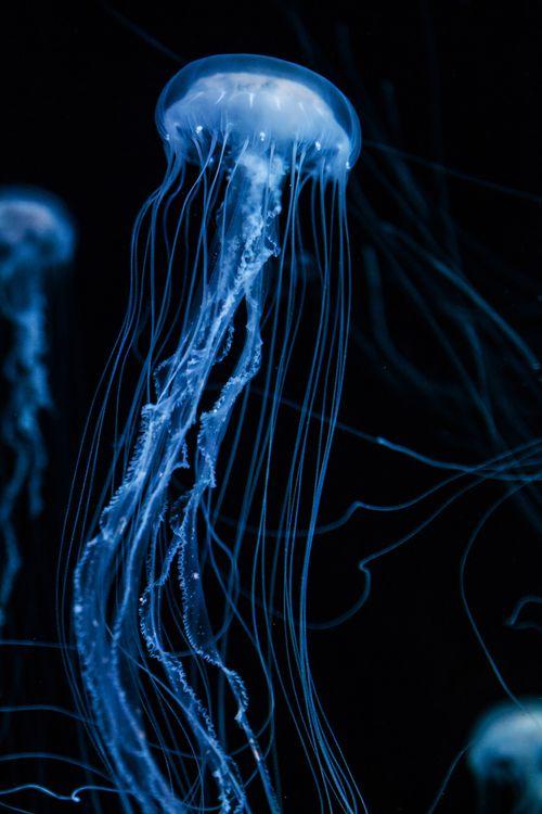 Jellyfish by Luke Strothman