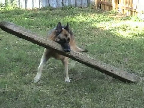 the 335 best images about german shepherds on pinterest german shepherd puppies training and. Black Bedroom Furniture Sets. Home Design Ideas
