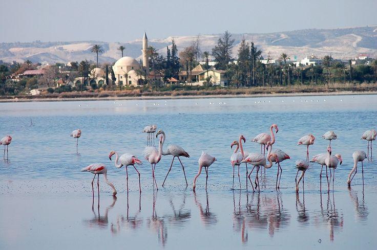 Salt Lake – este casa pentru aproape 85 de specii de păsări de apă migratoare, cum ar fi flamingo. Aproximativ 10.000 de păsări flamingo vizitează lacul fiecare an în lunile ianuarie și februarie.