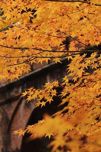 Nanzenji temple #japan #kyoto http://www.japanesegardens.jp/gardens/famous/000018.php