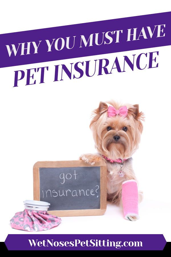 Why You Need Pet Insurance Pet Insurance Cheap Pet Insurance