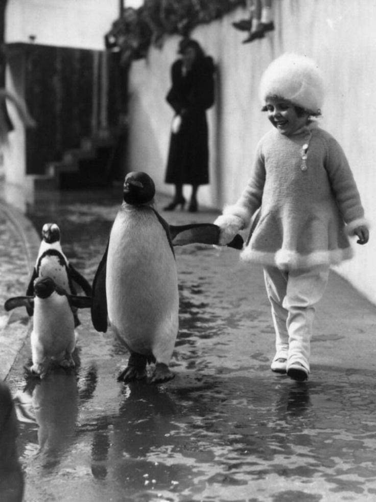 A little girl holds a penguin's flipper as they walk together around the London Zoo 1937.