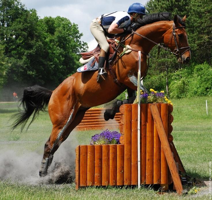 Les 34 meilleures images du tableau saut d 39 obstacle questre sur pinterest chevaux d 39 obstacles - Frison saut d obstacle ...
