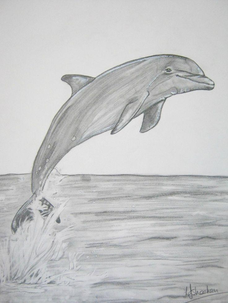 это рисунки с дельфинами карандашом брежнева
