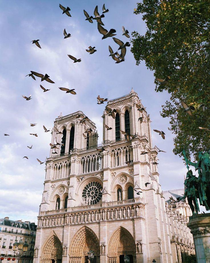 Notre-Dame de Paris 🕊️