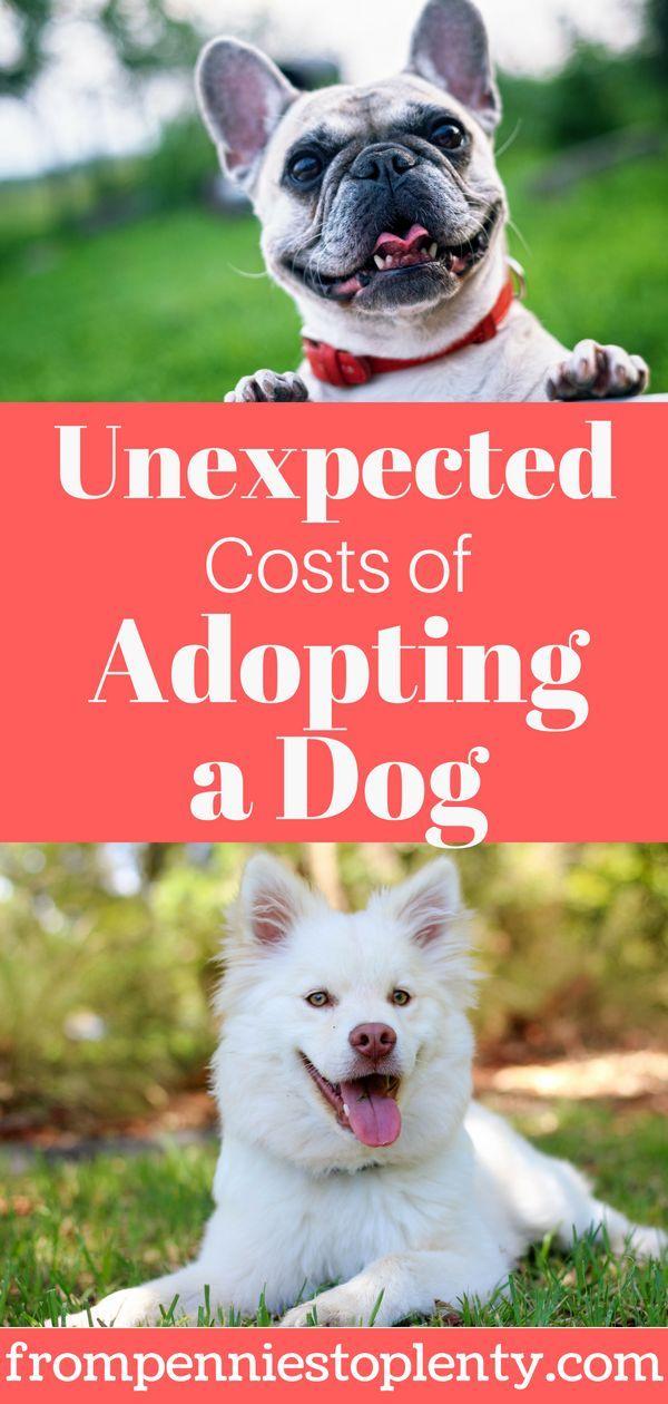 5 Unexpected Costs Of Adopting A Dog Dog Adoption Pet Adoption Adoption