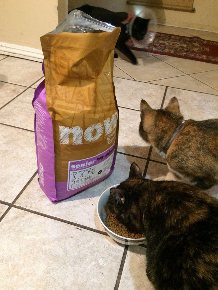 Snag $5 off savings for Petcurean pet food your senior cats.  #NourishForLife #Petcurean #ad