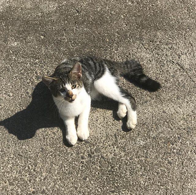 顔wwwwww飼い主に似るってほんとだな!!(笑)#面白い顔#面白い猫#顔が面白い#Fascinatingcat#Fascinatingface猫#愛猫#我が家の猫#可愛いにゃんこ#可愛い猫#猫🐈🐾#cat#cat🐾#癒し猫#子猫#可愛い子猫#smallcat#子猫🐾#Japanesecat#mycat#catsofinstagram#catsagramcats#bestcats_oftheworld#lovelycats#animal#メス猫#でかくなった#でかい猫#飼い主に似る