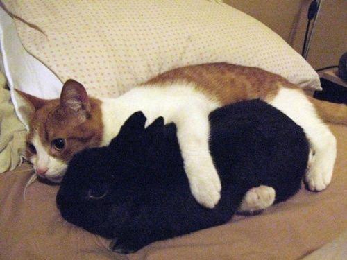 Cat s Resume T Shirt  Cat s Resume Cat s Resume Spreadshirt