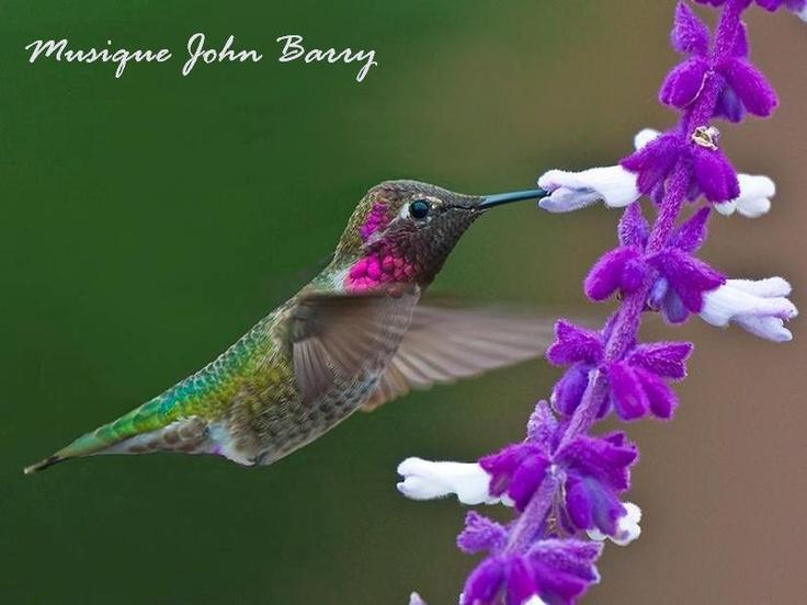 111 Best Flower Loving Birds Images On Pinterest