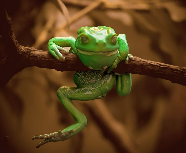 #cute #frog #photography
