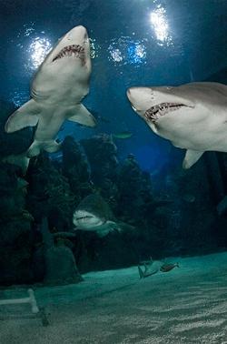 Diving at the Denver Downtown Aquarium
