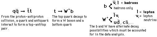 The Top Quark, also known as the t quark (symbol: t) or truth quark, is an elementary particle and a fundamental constituent of matter. Like all quarks, the top quark is an elementary fermion with spin-1⁄2, and experiences all four fundamental interactions: gravitation, electromagnetism, weak interactions, and strong interactions. It has an electric charge of +2⁄3 e,[2] and is the most massive of all observed elementary particles.
