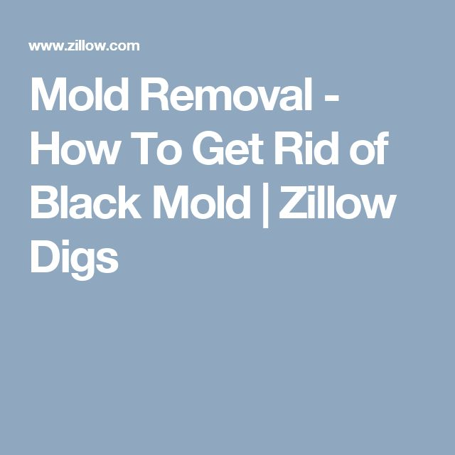 mold removal how to get rid of black mold - Black Mold Removal Products