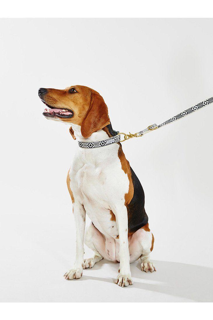 See Scout Sleep City Dog Leash $48.00