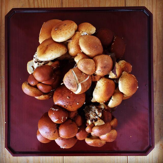 いただいた天然のなめこ、会津下郷でとれたもの! 落ち葉付の新鮮なキノコは見ているだけで美しいです(^^