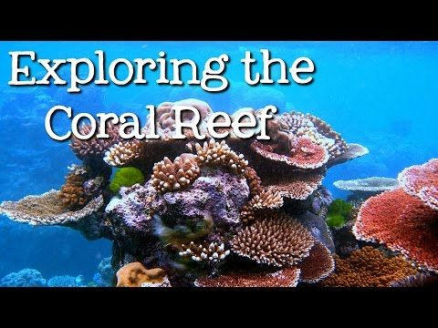 Exploring the Coral Reef: Learn about Oceans for Kids - FreeSchool - YouTube