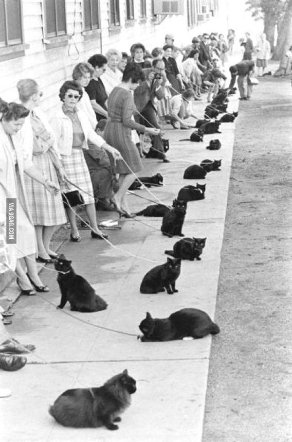 Кастинг на главную роль в голливудском фильме ужасов «Призрак кота», 1961 год. © UCLA Archives XDDD - без подписи не догадалась бы)))