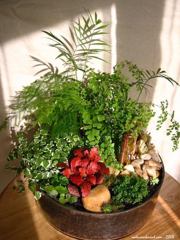 150 best Jardin du0027intérieur images on Pinterest House plants - mini jardin japonais d interieur