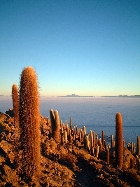 Salar de Uyuni - Bolivia  Bolivia is the inspiration behind the latest collection at Obus clothing. http://obus.com.au/