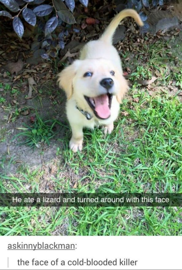 50 Funny & Cute Dog Pictures #cutedogs